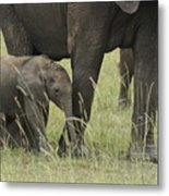 Protecting The Little One Metal Print