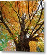 Proud Maine Tree In The Fall Metal Print