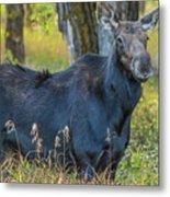 Proud Mama Moose Metal Print