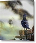 Proud To Be A Pigeon Metal Print