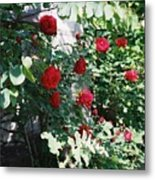 Provence Red Roses Metal Print