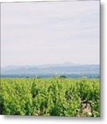 Provence Spring Vineyard Metal Print