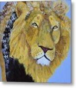 Prowling Lion Metal Print