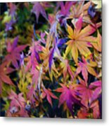 Psychedelic Maple Metal Print
