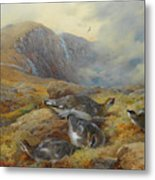 Ptarmigan Danger Aloft By Thorburn Metal Print