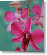 Puanani Kealoha Dendrobium D Burana Red Flame Hawaiian Orchid Metal Print