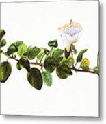 Puapilo Plant Metal Print