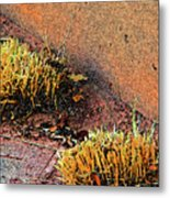 Pueblo Downtown Landscaping Metal Print