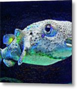 Puffer Fish Metal Print by Jane Schnetlage