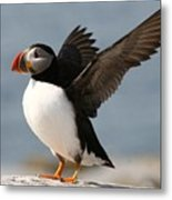 Puffin Impersonating An Eagle Metal Print by Stanley Klein