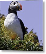 Puffin On The Rock Metal Print