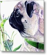 Pug And Nature Metal Print