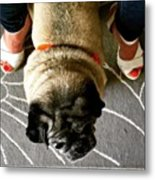 Pug Between Woman's Leg Metal Print