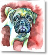 Pug In Red Metal Print