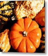 Pumkin And Gourds Metal Print