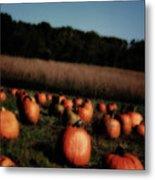 Pumpkin Field Shadows Metal Print