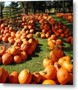 Pumpkin - Happy Thanksgiving Metal Print