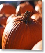 Pumpkin Patch Farm Metal Print