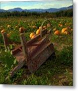 Pumpkin Patch. Metal Print