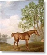 Pumpkin With A Stable-lad Metal Print by George Stubbs