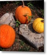 Pumpkins For October  Metal Print