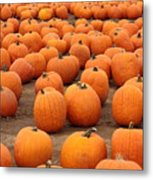 Pumpkins Waiting For Homes Metal Print