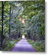 Pumpkinvine Trail In Fall Metal Print