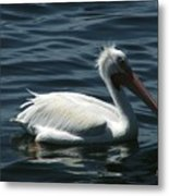 Punk Pelican - Side View Metal Print