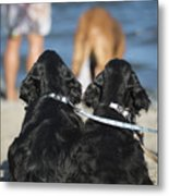 Puppies On The Beach Metal Print by Camilla Brattemark