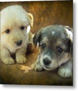 Puppies Metal Print
