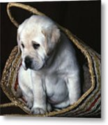 Puppy In A Basket Metal Print