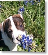 Puppy In The Blubonnets Metal Print
