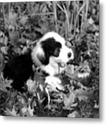 Puppy In The Leaves Metal Print