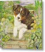 Puppy On The Step Metal Print
