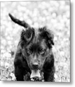 Puppy Play Metal Print