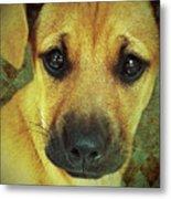 Puppy Portrait Metal Print