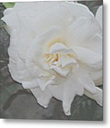 Pure And Pleasant Metal Print