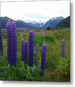 Pure And Simple Nature Of New Zealand Metal Print