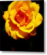 Pure Yellow Petals Metal Print