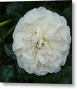 Purity And Perfection Metal Print
