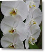 Purity Metal Print