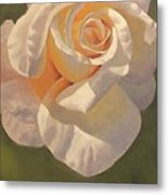 Purity Rose Metal Print