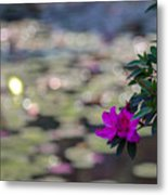 Purple-1 Metal Print