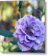 Purple Rose Glow Metal Print