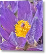 Purple And Gold - Bright Metal Print