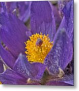 Purple And Gold Metal Print