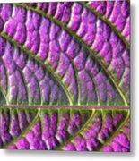 Purple And Green Leaf Metal Print