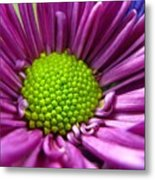 Purple And Green Metal Print