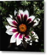 Purple And Orange Glow Metal Print