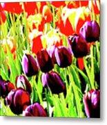 Purple And Peach Tulips 2 Metal Print